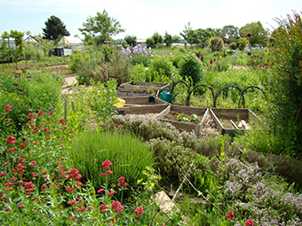 Galerie photos jardins familiaux for Jardin ouvrier 78